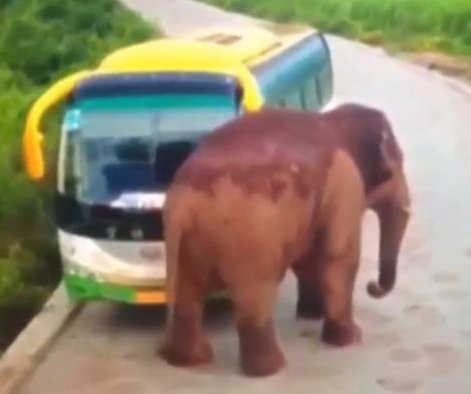 Elephant attacks bus, truck on Chinese road