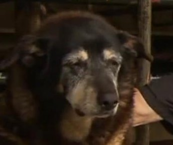 Dog thought to be world's oldest dies at 30 years old