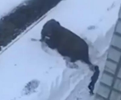 Elephants escape circus in Russia to play in the snow