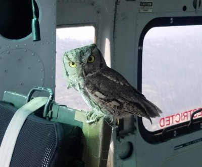 Owl boards helicopter fighting California wildfire