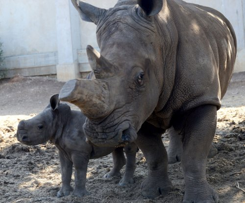South African rhino poaching increased 50% this year, still lower than before pandemic