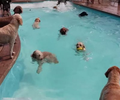 Doggie daycare's pampered pooch pool party is pure summer joy