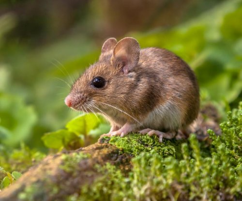 'Brainy mice' may lead to better cognitive disorder treatments