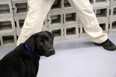 Dog dropped by CIA after refusing to sniff out explosives