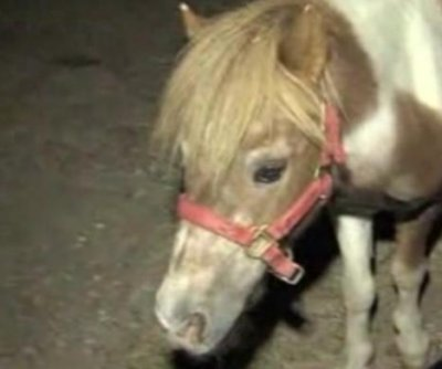 Los Angeles police catch miniature horse running in traffic