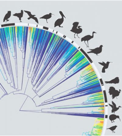 Study: Birds species diversifying, growing