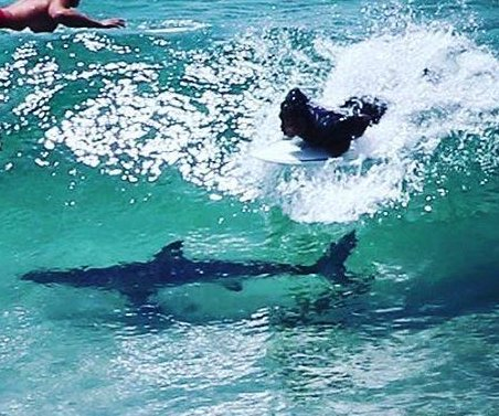 Surfer passes directly over shark at popular Australian beach