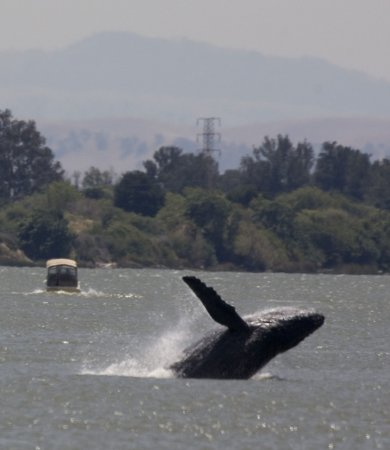 Sea plane almost lands on whale in Alaska