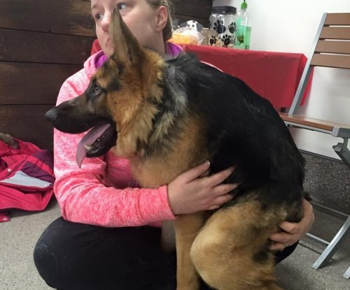 Quasimodo the short-spined German shepherd wins hearts online
