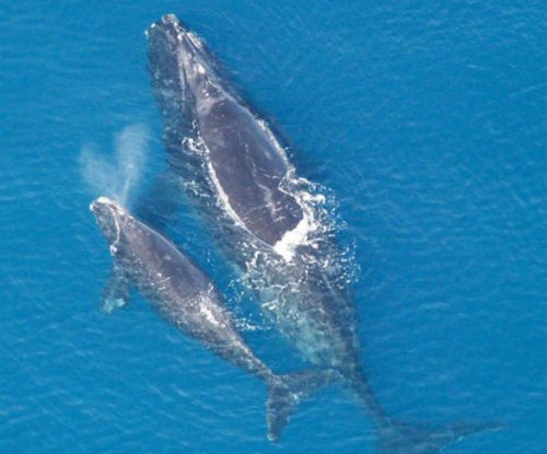 Romans may have hunted Mediterranean whales to near-extinction