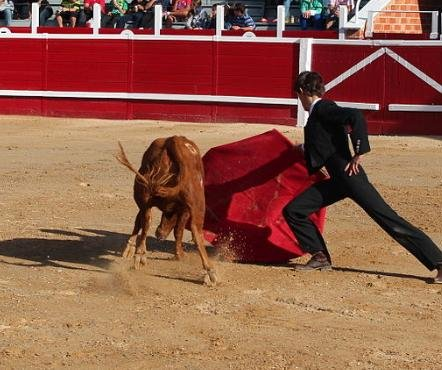 Spanish court overturns bullfighting ban in Catalonia