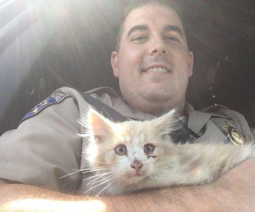 Kitten found stranded in middle of Golden Gate Bridge