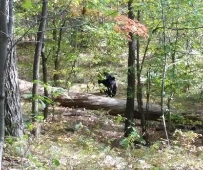 Police release photos of bear taken by victim of fatal attack