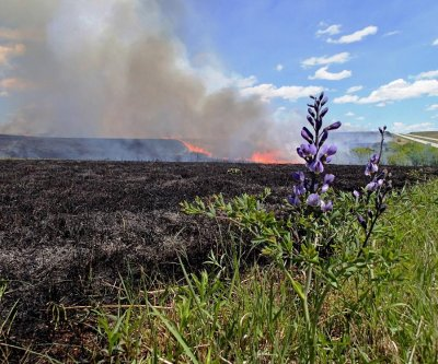 Doctor's orders for tallgrass prairie: More fire