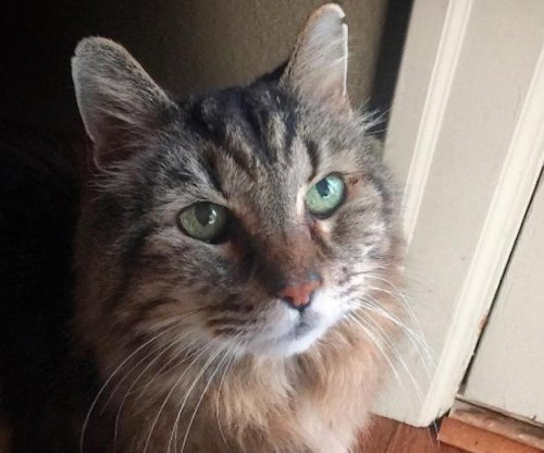 Cat, formerly named world's oldest, missing in Oregon