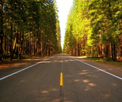 Scientists identify best trees for fighting roadside pollution