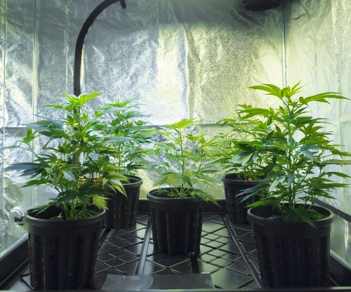 Florida man asks deputies to check home; deputies find grow house