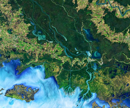 Complex river networks sustain more resilient, diverse animal populations