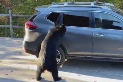 Bear opens car door, climbs inside in Tennessee