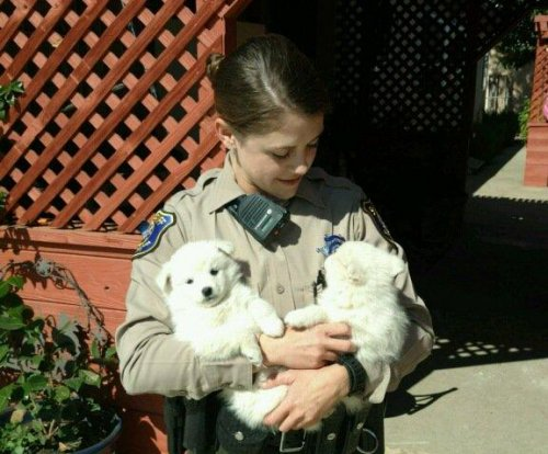 Pair of puppies suspected of setting off burglary alarm