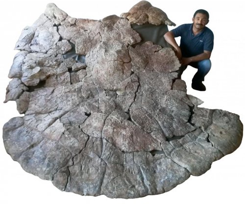 Extinct South American giant turtle had 10-foot-wide horned shell