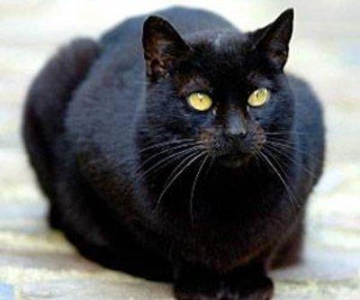 Cat assists in capture of Pennsylvania fugitive
