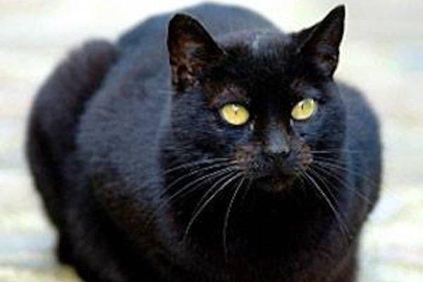 Cat Assists In Capture Of Pennsylvania Fugitive Upi Com