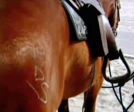 Tagger sprays graffiti on Los Angeles police horse's backside