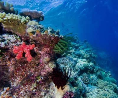 Continental drift to thank for coral reef biodiversity