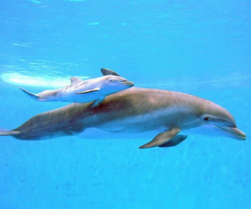 Chicago's Brookfield Zoo home to newborn bottlenose dolphin