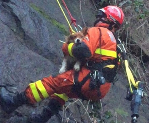 Dog rescued from quarry ledge after earthquake in Wales