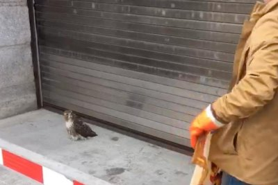 Hawk crashes into U.S. Attorney's office in New York