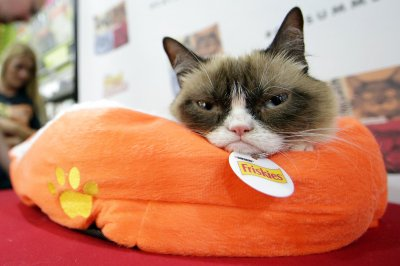 Grumpy Cat, Internet sensation, dead at 7