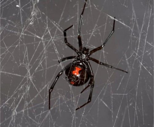 Researchers extract, sequence spider DNA from spider web