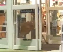 Wandering deer runs into Kohl's store in Ohio