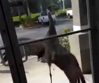 Angry crane attacks office door after knocking is ignored