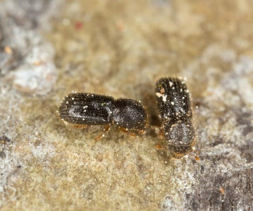 Can humans learn from the farming prowess of ambrosia beetles?