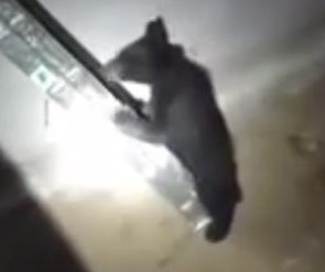 Bear cub climbs ladder to escape basement in Wisconsin