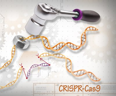 Gene editing method may cause chromosome loss in developing embryos
