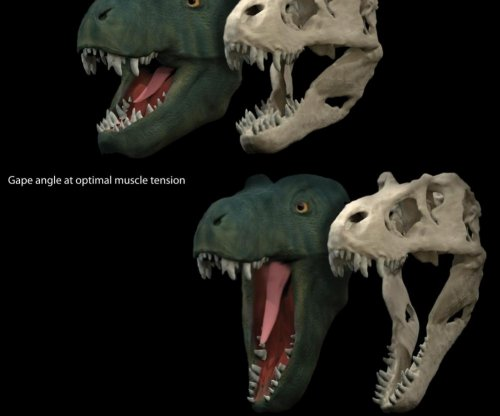 How did tyrannosaurs eat? With really wide-hinging jaws
