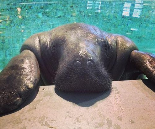 Snooty, oldest manatee in captivity, dies at 69