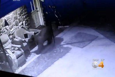 Bear shreds screen, climbs into basement of Colorado home