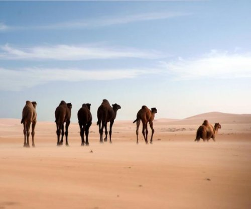 Study tells genetic history of dromedary camel
