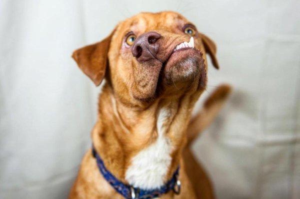 Rescue Dog Health Problems