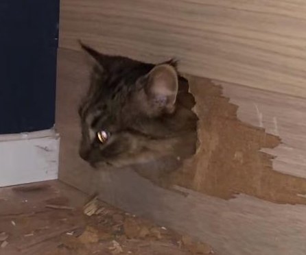 Family finds missing cat trapped in new staircase