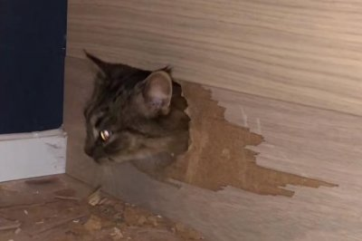 Watch: Cat Rescued From Inside Familyu0027s New Stairs   UPI.com