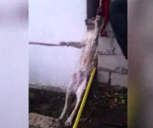 Firefighters rescue wedged dog from wall gap