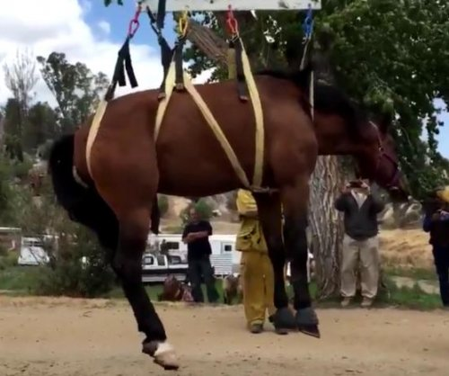 Horse hoisted from 12-foot-deep well at California ranch