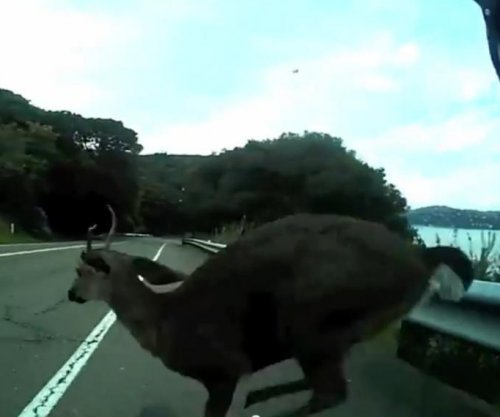 Helmet cam captures cyclist's crash with deer