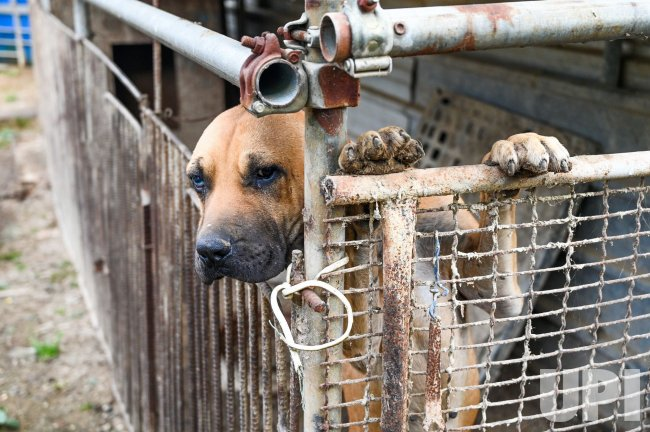 A Dog Looks Out from a Holding Pen at a Meat Farm